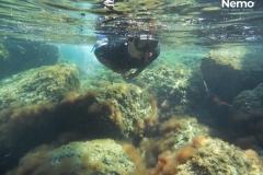 snorkeling su L. lallemandii