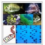 biodiversità ambiente marino
