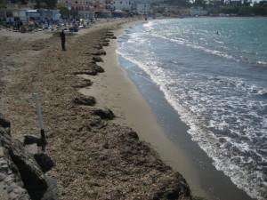 banquettes di posidonia oceanica sulla spiaggia di s.pietro ad ischia