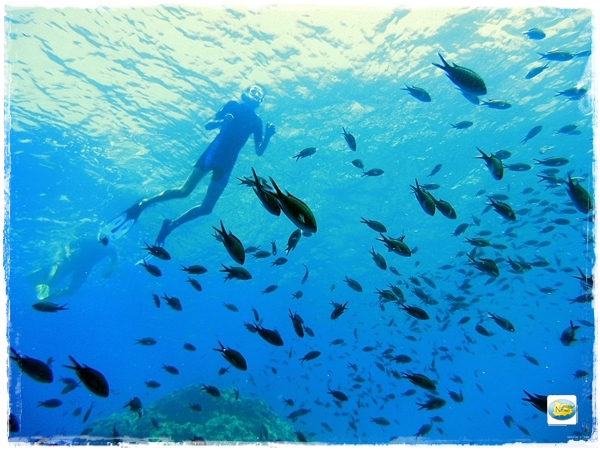 roja snorkeling sant'Angelo