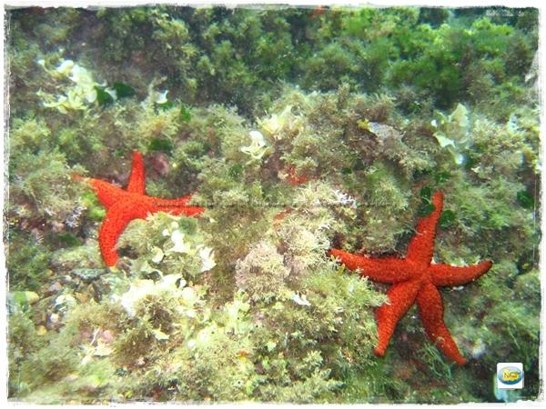 stelle marine castello