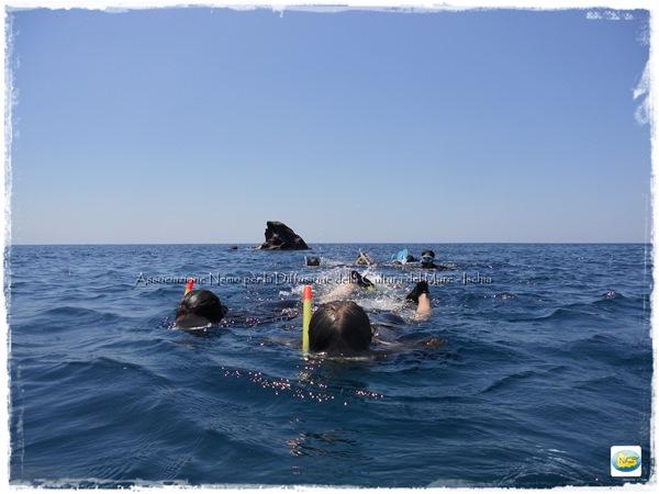 snorkeling roja ischia