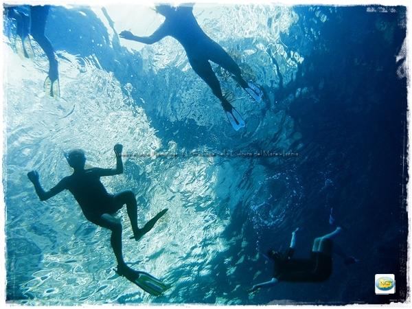 snorkeling elefante ischia